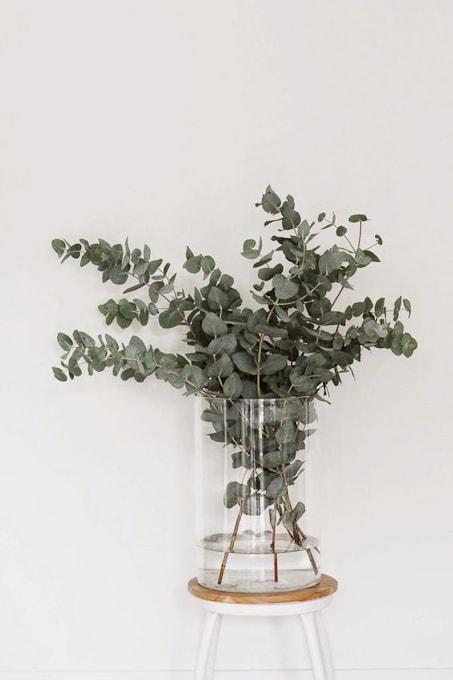 So many creative ideas for using Eucalyptus - my favorite green!
