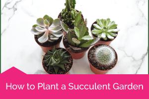 Succulent_Garden