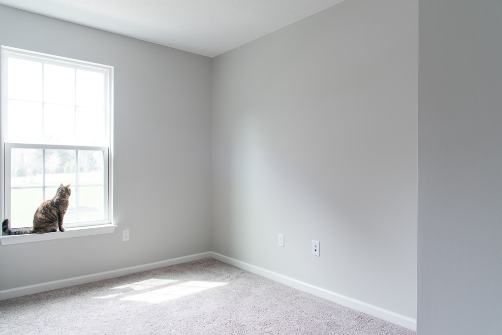 empty room with gray paint and a cat in the window valspar tempered gray