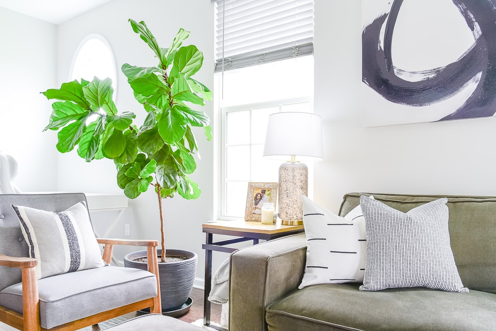 fiddle leaf fig tree next to a couch in the living room