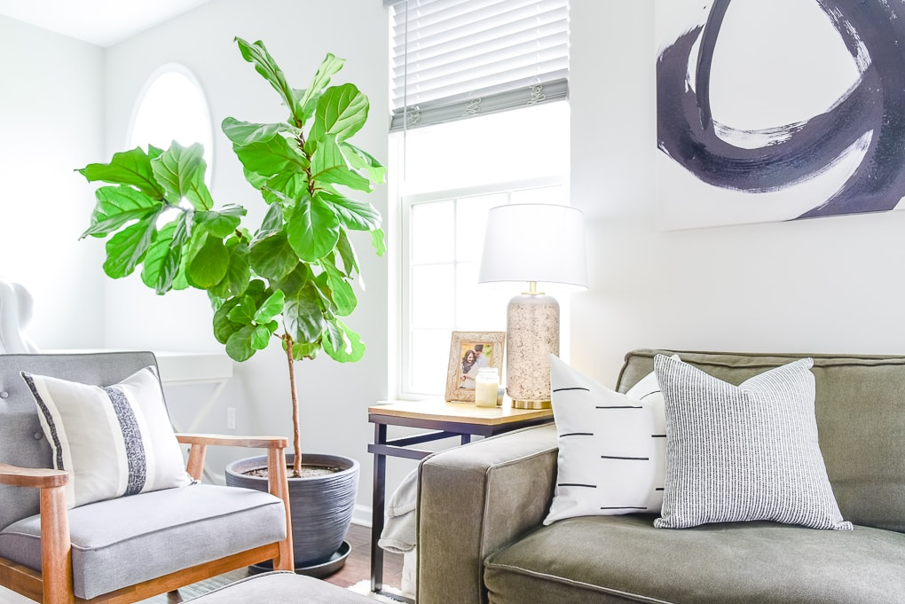 fiddle leaf fig tree next to couch on the left