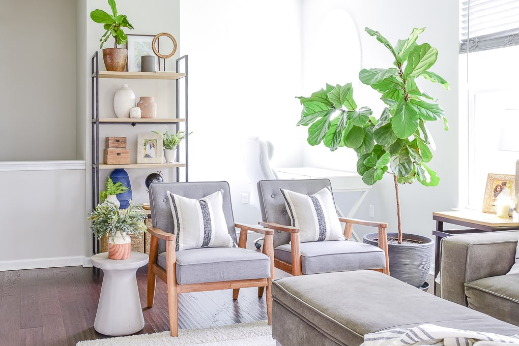 fiddle leaf fig tree in living room on the right